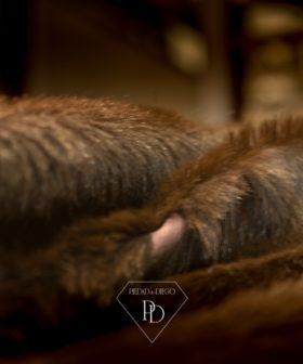Manta-alfombra de piel de cabrito Reversible